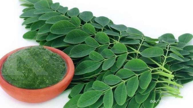 Efek samping dan manfaat daun kelor untuk kesehatan