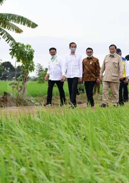 Food estate mulai digarap Oktober seluas 30.000 ha dari total 1,4 juta ha