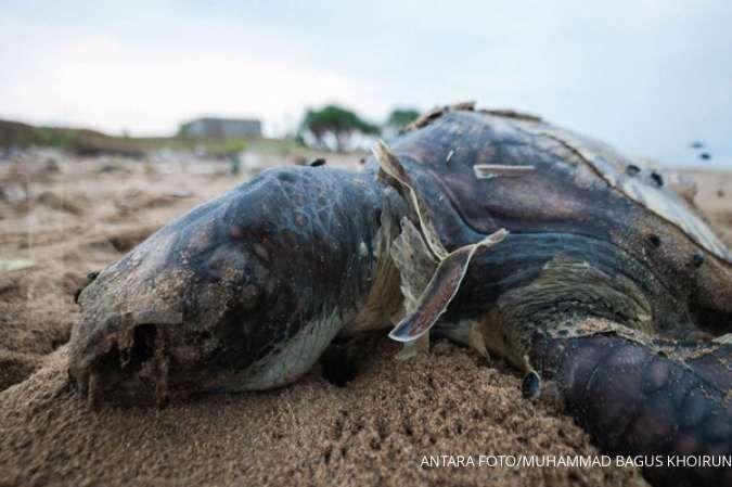 Warga Klaten temukan ikan toman dan bulus raksasa di terowongan buatan Belanda