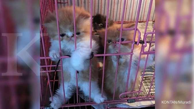 Jangan bingung, pilih dan hindari makanan Kucing Persia berikut