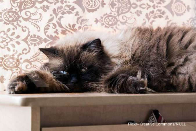 4 Tips agar kucing bahagia dengan aktivitas dalam rumah