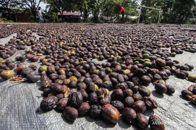 5 Negara penghasil kopi terbesar di dunia, termasuk Indonesia
