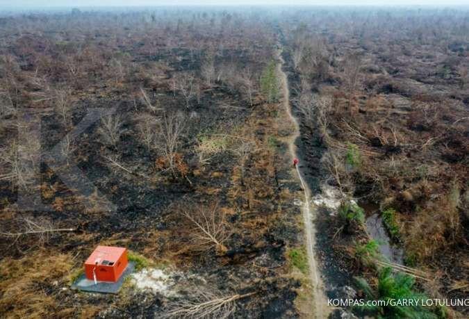 Greenpeace: 30% kebakaran lahan Indonesia terjadi di hutan industri dan kebun sawit
