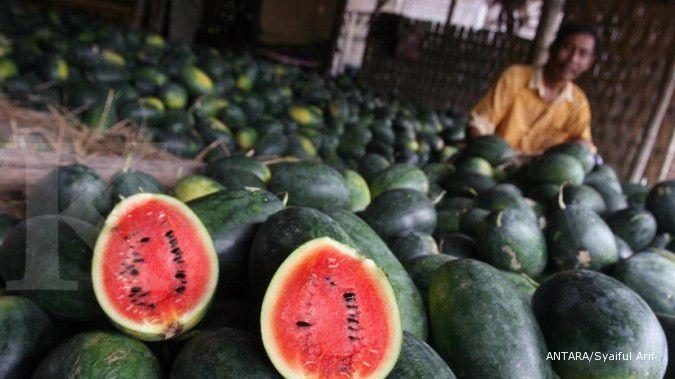 Wow! Ini manfaat baik semangka untuk kesehatan ibu hamil