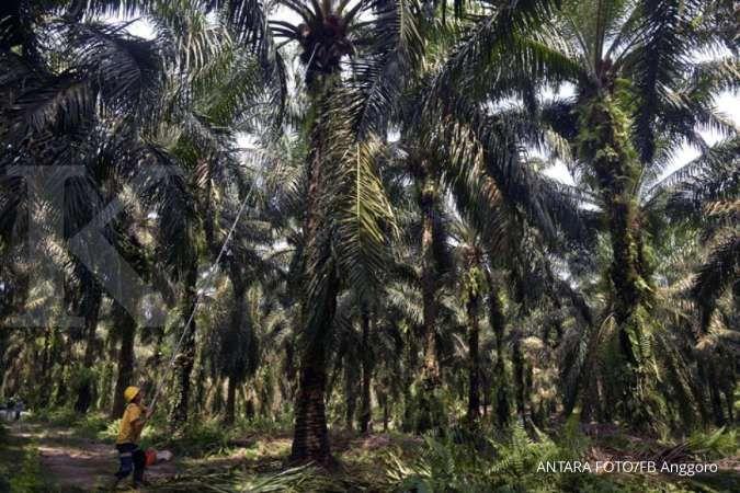 Indonesia bakal ajukan panel di WTO terkait sengketa impor kelapa saawit dengan UE