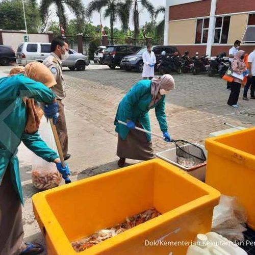 Cegah HPIK & Impor Ilegal, KKP Musnahkan Ribuan Ikan Asal Jepang, Thailand & Kolombia