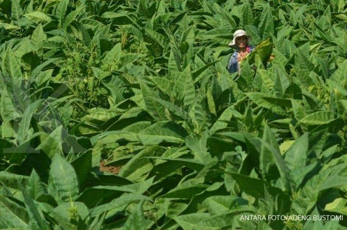 Revisi PP 109/2021 disebut semakin memberatkan petani