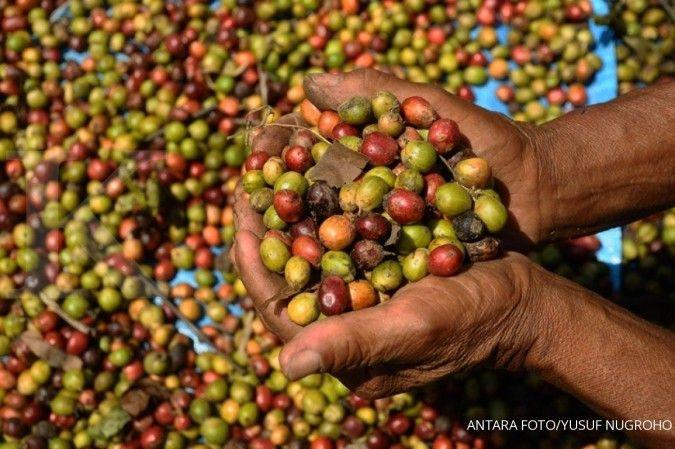 Tahun ini, permintaan kopi robusta diperkirakan masih stabil
