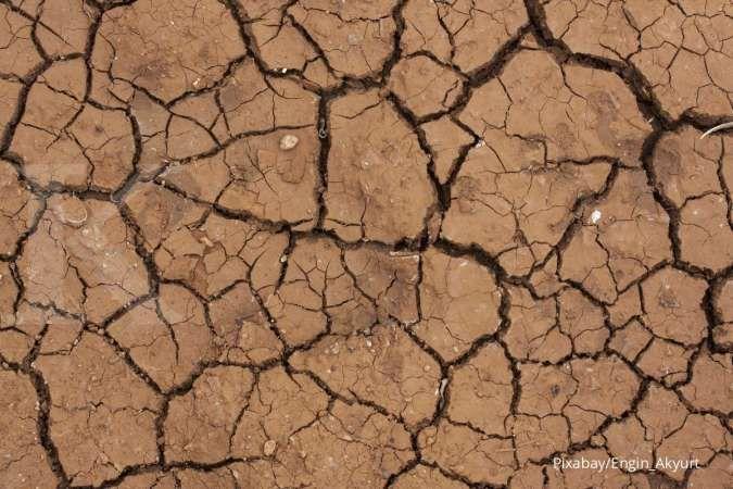 4 Cara Mengatasi Tanah dengan Kandungan Asam Tinggi