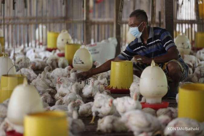 BRI Danareksa jadikan saham JPFA dan MAIN sebagai top pick di sektor poultry