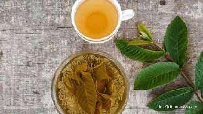 Luar biasa! Ini 6 manfaat teh daun jambu biji untuk kesehatan