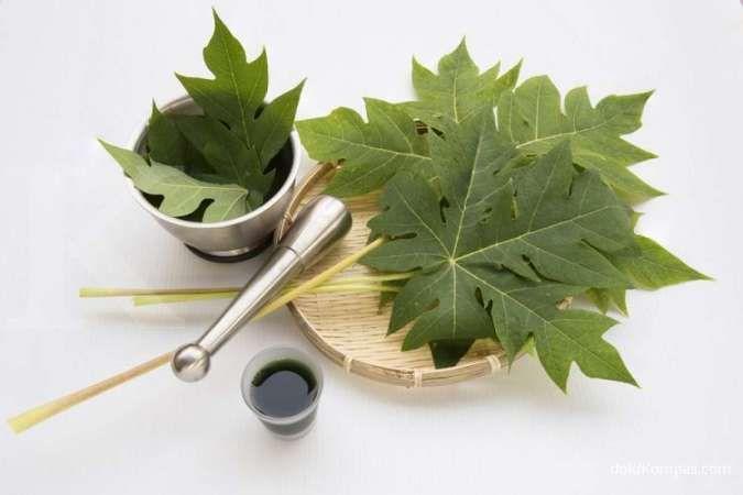 Khasiat daun pepaya bagi kesehatan, menurunkan gula darah, hingga bagus untuk liver