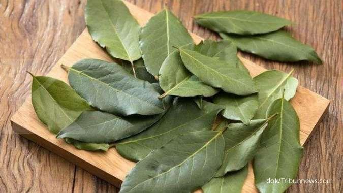 Jarang diketahui, berikut 7 manfaat daun salam untuk kesehatan dan kecantikan