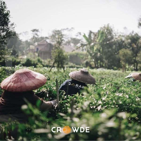 Tawaran modal usaha pertanian dari Crowde untuk petani lewat program GARAP
