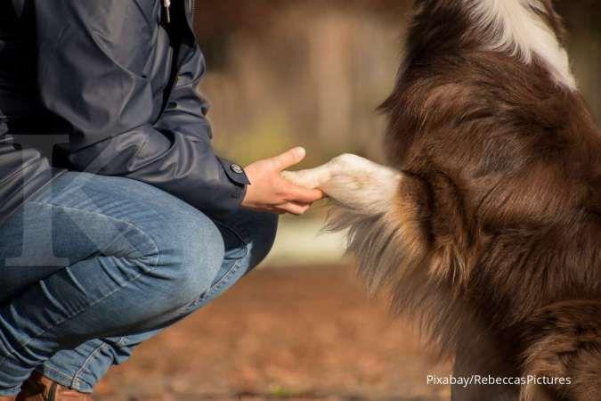 Manfaat memiliki hewan peliharaan saat pandemi