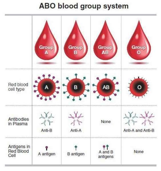 Lagi, penelitian sebut risiko orang golongan darah O lebih kecil terpapar corona