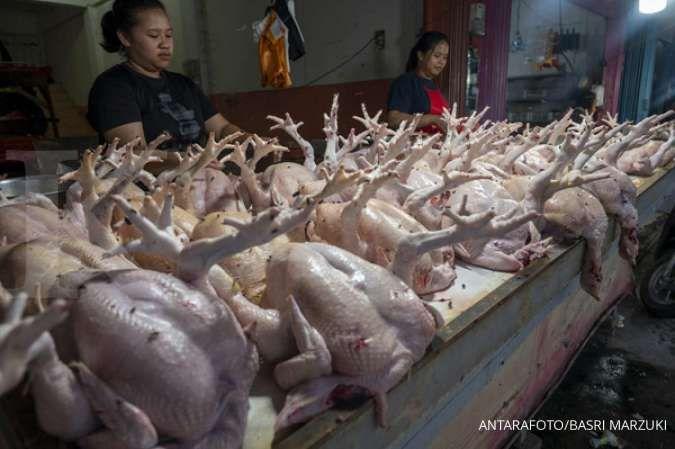 Tips membedakan ayam segar dan tiren, biar tidak tertipu pedagang nakal