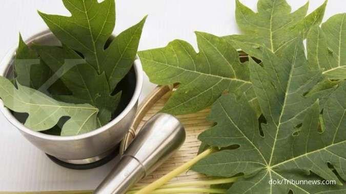 4 Manfaat daun pepaya, bisa mencerahkan kulit