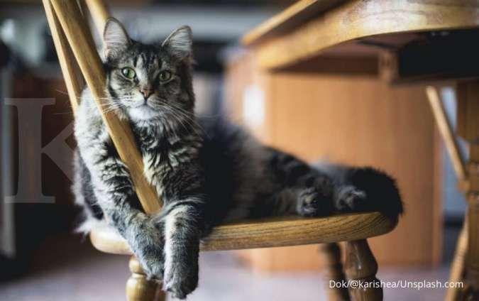 Kucing mendadak tidak mau makan, kondisi ini bisa jadi penyebabnya