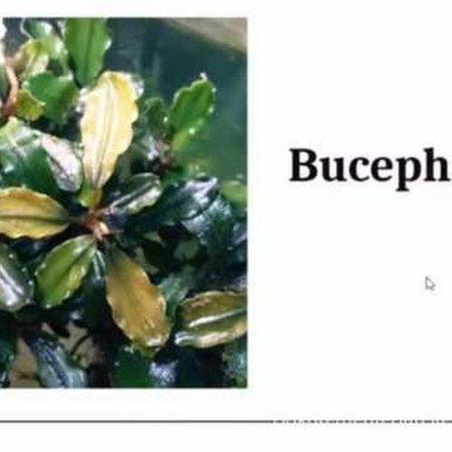 Aquatic Plant, Si Cantik Andalan Penghobi Aquascape