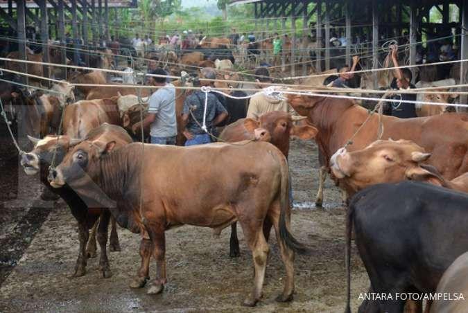 Menjelang perayaan Idul Adha, penjualan sapi kurang moncer