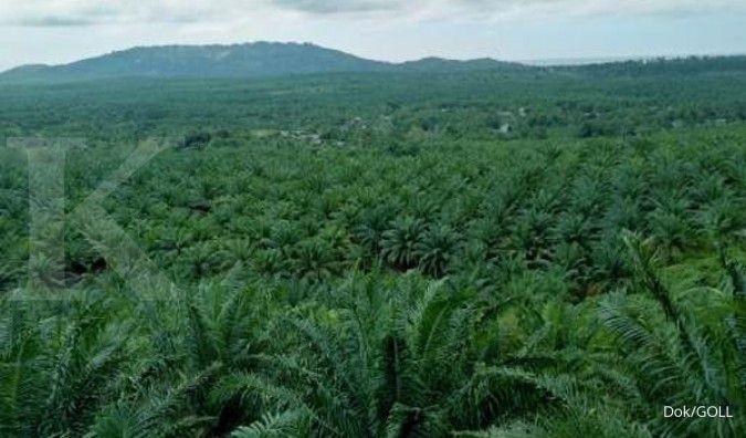 Dua anak usaha Golden Plantation (GOLL) dikabarkan pailit
