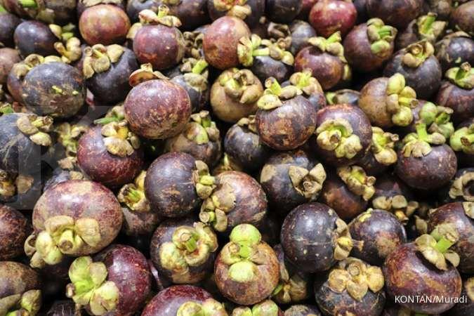 Ilustrasi. manfaat buah manggis untuk kesehatan tubuh.