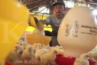 Gabungan Perusahaan Makanan Ternak Memprediksi Permintaan Naik 20% Jelang Bulan Puasa