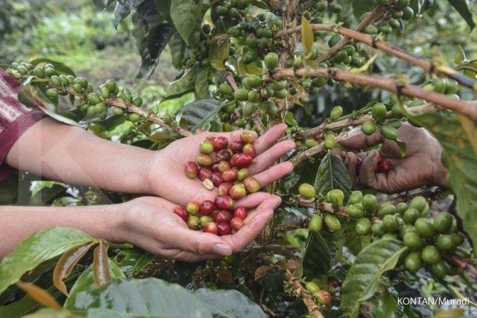 Perusahaan kopi lokal tertekan pasar global dan konflik keluarga