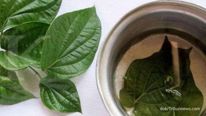 Patut waspada, 3 efek samping daun sirih ini bisa Anda alami