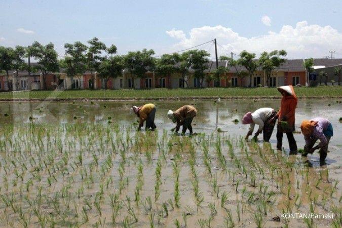 Kementan sebut produksi beras capai tiga juta ton per bulan di tahun depan