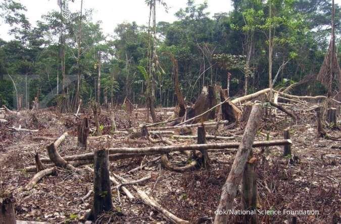 Penggundulan hutan Amazon meningkatkan penularan penyakit malaria