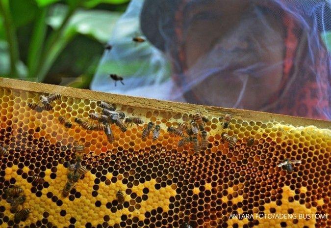 Cara mudah membedakan madu asli dengan yang palsu , tips petani Banten