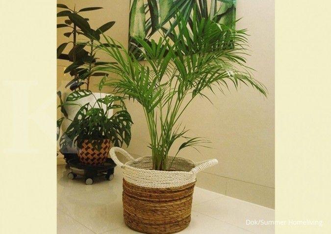 Selain diletakkan di pojok ruangan, tanaman hias gantung juga cocok dijadikan hiasan.