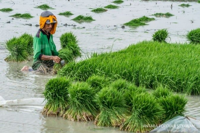 Petani menanam bibit tanaman padi di areal persawahan Desa Ketanjung, Karanganyar, Demak, Jawa Tengah, Selasa (23/10/2018). Meski belum memasuki musim hujan karena kemarau panjang yang dipengaruhi oleh anomali cuaca El Nino, petani setempat mulai melakuka