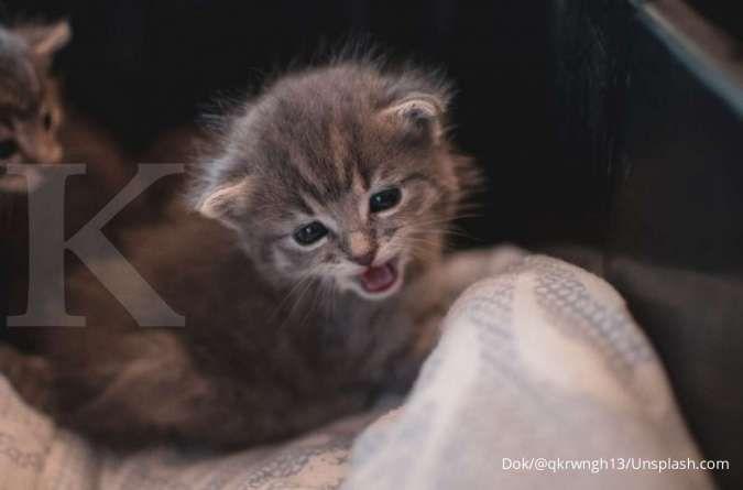 Peliharaan Kucing