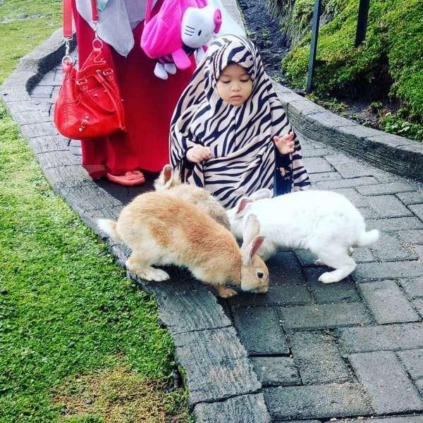 Taman Kelinci Malang, tempat liburan yang cocok untuk anak-anak