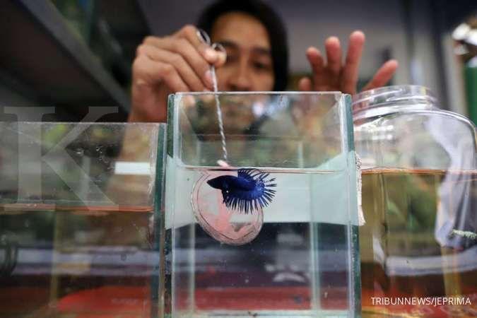 Ini sebab ikan hias mati mendadak di akuarium
