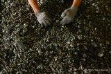 Freeport dan Antam (ANTM) Siap Mengekspor Mineral Mentah