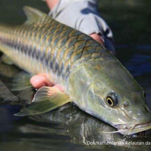 KKP Rintis Kampung Ikan Dewa di Sumedang