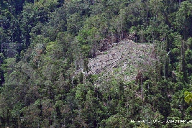 Toolkit baru untuk identifikasi hutan diluncurkan