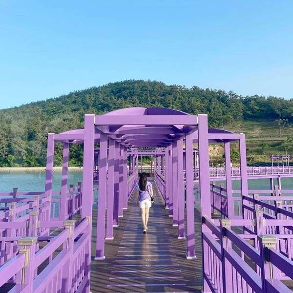 Pulau Ungu merupakan tempat wisata terbaru di Korea Selatan yang serba ungu. Dok: Kim Ha Young (@khy_0131)