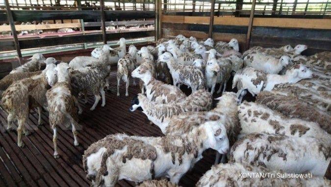 Bea Cukai Teluk Nibung lepas ekspor perdana 200 ekor domba