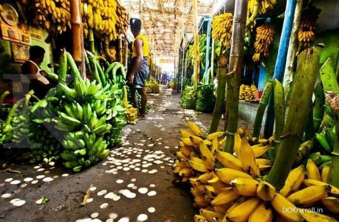 5 Manfaat pisang yang bisa dirasakan oleh tubuh