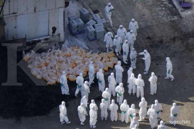 Rusia umumkan kasus perdana flu burung pada manusia - Internasional Kontan