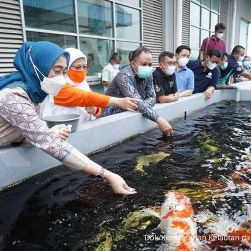 Dilengkapi Fasilitas Wisata dan Ekspor, Raiser Cibinong Siap Majukan Ikan Hias Indonesia