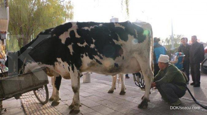 Ini komentar Gapmmi soal pengenaan tarif bea masuk impor susu Uni Eropa