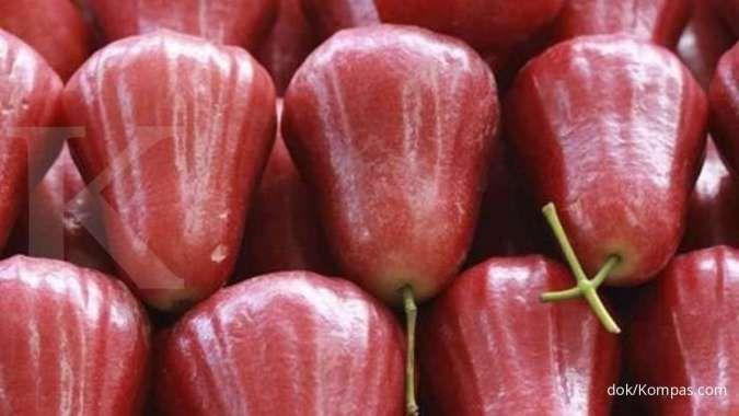 7 Manfaat jambu air merah untuk kesehatan yang belum banyak diketahui