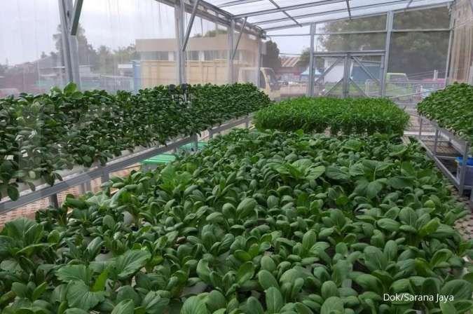 Sarana Jaya hadirkan urban farming di Jakarta Timur