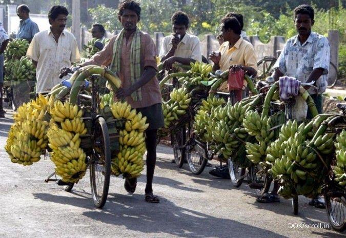 Luar biasa, ini manfaat kulit pisang yang sering diabaikan